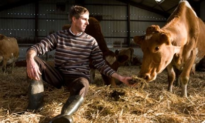 Farmer Dave Paul of Hurdlebrook Farm with one of his Guernsey cows