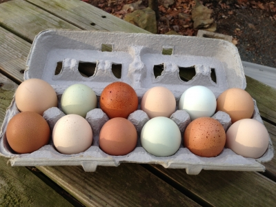 Fresh pastured eggs in North Carolina