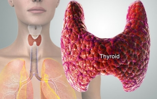 The thyroid and where it is in the body