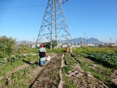 Abalimi Bezekhaya Farmers of Home supported garden in Cape Town Township